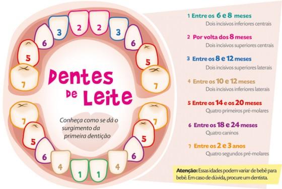 Dentição - ordem