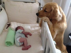 Cachorro observa bebê dormindo