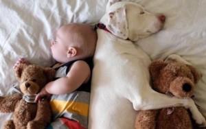 Dormindo Cachorro e bebê