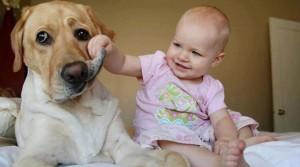 Bebê mexendo no cachorro
