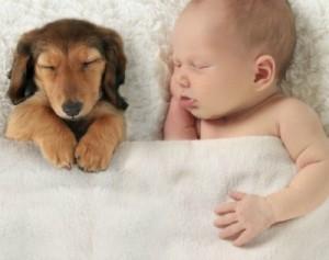 Soneca do cachorro e do bebê