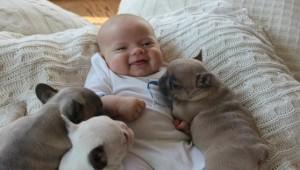 Sorriso do bebê com os cachorros